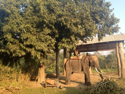 First  glimpse of an elephant (on the day of arival)