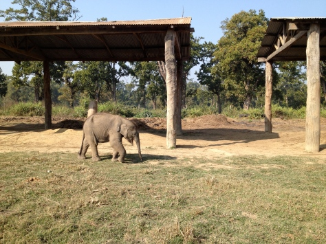 Baby elephant at the local elephant breeding center. It also had a twin