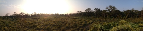 Panorama just out of the woods. We didn't see rhinos this time either but we did see a deer family