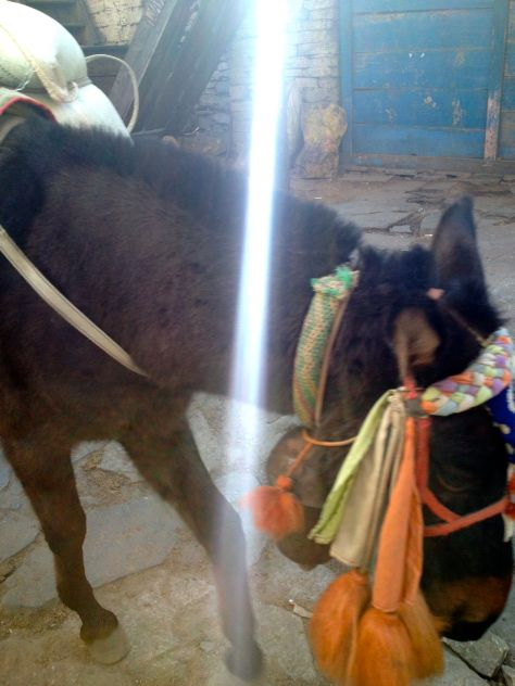 Sun was shining on this local donkey from Chame.