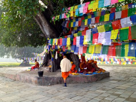 a Holy tree in the holy garden