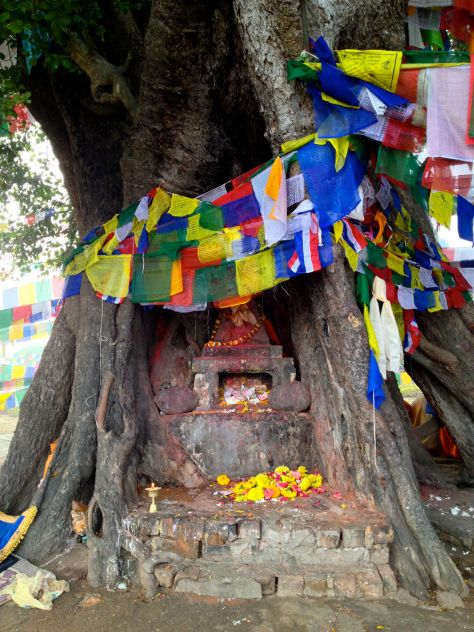 All they Brahmins would sit aroung and pray around this tree.