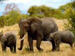 Ngorongoro crater july 2014 elephants