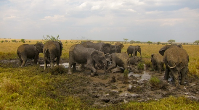 Elephants Cooling Down