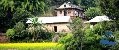 Mustard flowers and traditional Nepali farming house