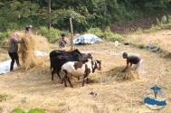 Local farming