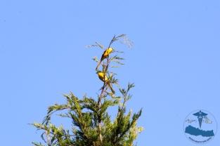 Beautiful Rukum nature, birds