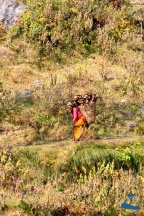 Carrying firewoods and crops. This traditional way of carrying heavy loads is seen everywhere in Nepal