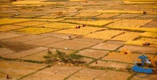 Himalayan agriculture #3