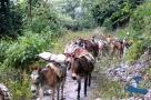 Rukum Donkeys