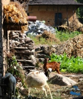 Goatskin Village of Rukum