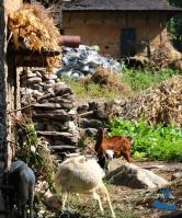 Goatskin Village of Rukum