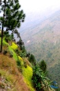 Himalayan rice and mustard terraces