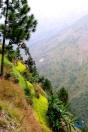 Himalayan rice and mustard terraces