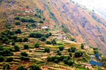 Beautiful rice terraces#1