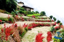 Beautiful rice terraces#2