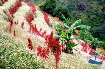 Beautiful rice terraces #3